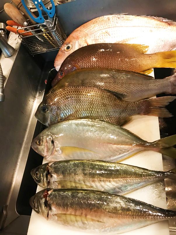 豊洲 魚、貝、甲殻類の食材
